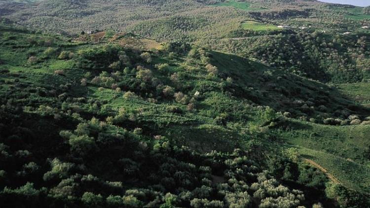 Riserva naturale orientata Bosco di Favara e Bosco Granza