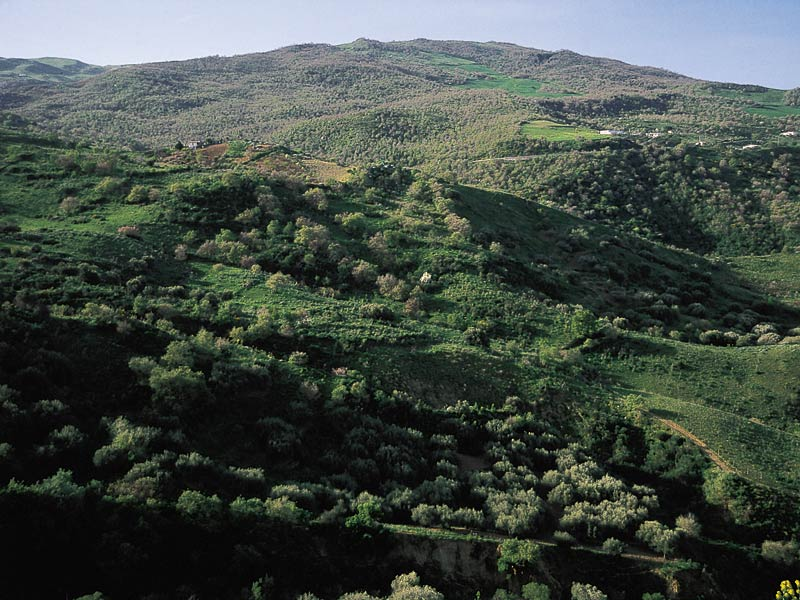 Parc «Riserva naturale orientata Bosco di Favara e Bosco Granza»
